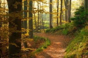 Woodland Burial Options